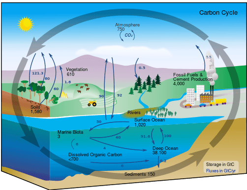 carbon cycle, systems theory, root cause, organization development, Toby Elwin, blog