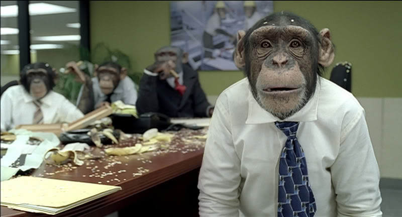 monkey, board of directors, meeting, Toby Elwin, blog